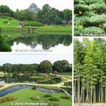 Very green Korakuen Garden, Okayama