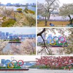 Olympic rings and cherry blossoms at Odaiba, Tokyo