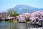 thumb_mi100-0323-36.jpg